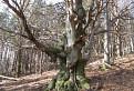 Zakliaty strom / 1.6000