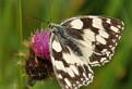 Motýľ / 1.0000