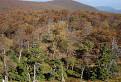 Jesenný bukový les / 1.2632