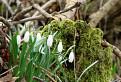Jar pod Kobylou / 1.3043