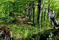 Rozprávkovým lesom.
