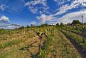 devinsky vinohrad / 1.0400