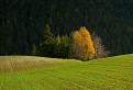 Jesenné farby / 1.0323