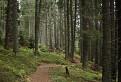 V lese Martalúzky / 1.6667