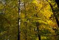 Jesenným malokarpatským lesom. / 1.0000