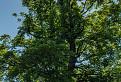 Strom a veža / 1.0833