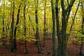 Jesenné farbičky / 1.2813