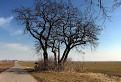 Jar prichádza na Dolné pole pri Rusovciach. / 0.0000