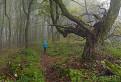 V Tolkienovom lese / 1.0000