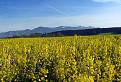 V krajine biopaliva / 1.1176