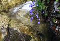 Jemná krása hôr