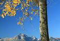 Strom a Lomničák