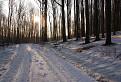 krásne, ranné chvíle v lese / 1.0769