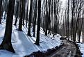 Lesná cesta II / 1.1500