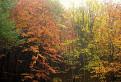 Červené, žlté, zelené - všetko sú farby jeseňe