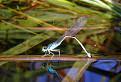 Vážky I. / 1.0909