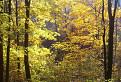 Septembrová žltá