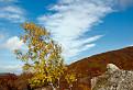 Malokarpatská breza / 1.0000