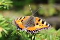 Ty motýľ môj, alias blízke stretnutie iného druhu /8/. / 1.3077